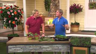 Cottage Farms Rainbow Magic Carpet Sedum with Rick Domeier