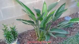 gardening flower#4