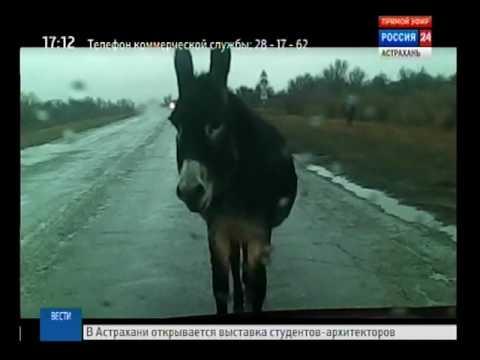 Интересный случай произошел на одной из дорог Володарского района