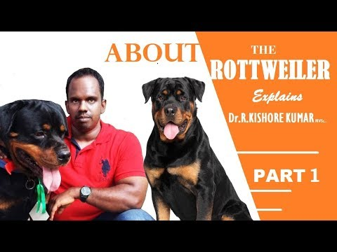 ராட்வீலர் நாய்கள் ( About Rottweiler in Tamil Part-1)