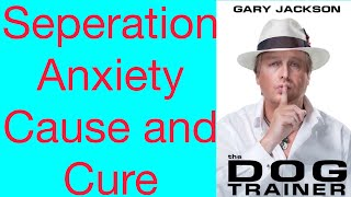 Quick Tip 5 Separation Anxiety Cause And Cure