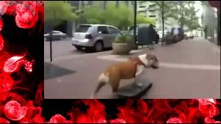 Смешные способности собак