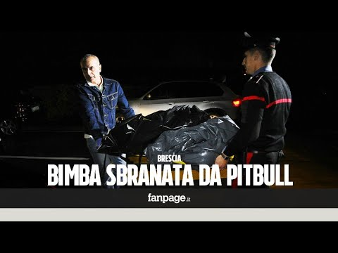 """Bimba uccisa da due pit bull a Brescia, il vicino: """"Avevo chiesto alla polizia di intervenire"""""""
