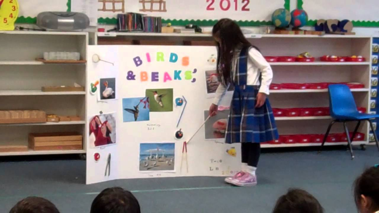 Kindergarten Science Fair 2012 Faye S First Presentation