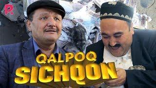 Download Qalpoq - Sichqon   Калпок - Сичкон (hajviy ko'rsatuv) Mp3 and Videos