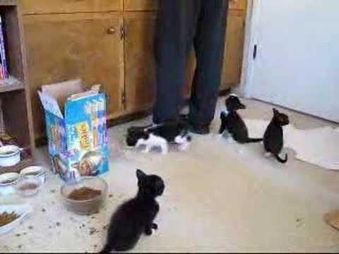 Kitten Feeding Time