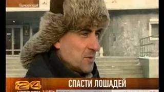 Орловские рысаки
