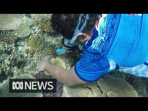 Coral gardening could rehabilitate dying reefs and save coastal communities | The World