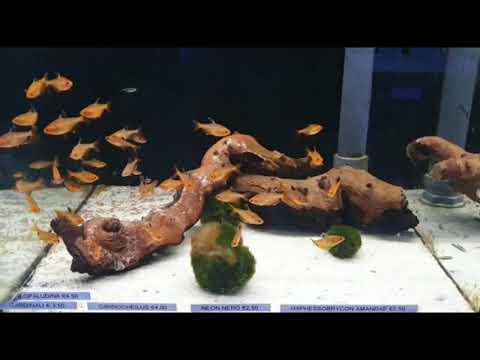 Pesci tropicali di acqua dolce e di acqua fredda