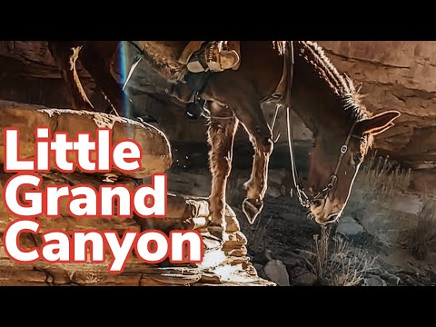Riding Mules In The Little Grand Canyon