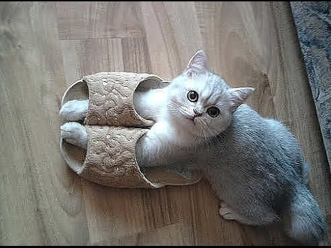 Best Funny Cat And Kitten Top Funniest Cats In The World Videos Compilation 2016