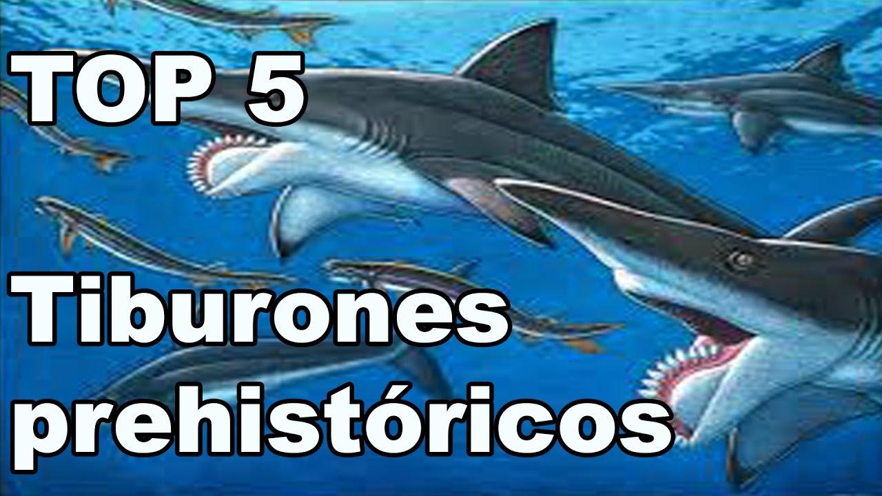 Los 5 Tiburones prehistóricos más impresionantes