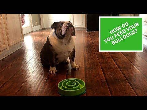 Tips And Tricks On Feeding English Bulldog