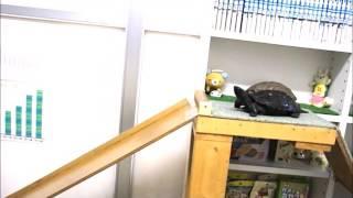 クサガメのクロちゃんが傾斜55度の坂を上り、長さ120cmのウォー...