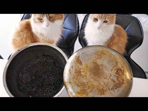 Cleaning Pots, Involving Pets
