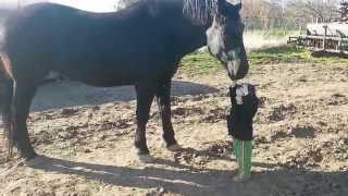 Small Child And Big Horse