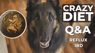 Dog Diet for Sensitive Stomach