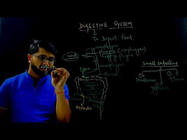 D-PHARMACY PART I  | HAP |  Digestive System