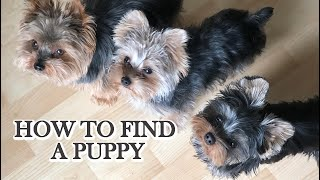 How To Find A Puppy (Pt.2)