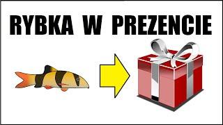 Rybki akwariowe w prezencie