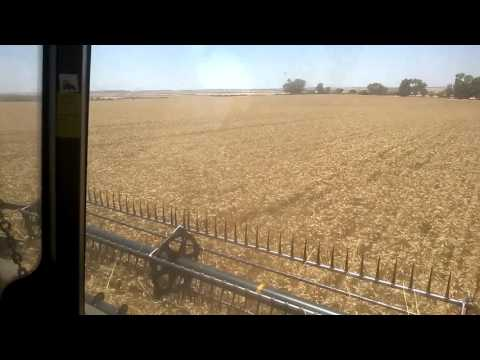 Paxton Plow Deep Ripping Yield Results, Marchagee Western Australia