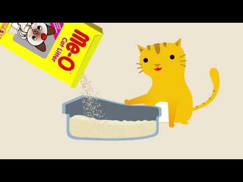 วิธีดูแลสุขภาพแมวที่ถูกต้อง by Me-O