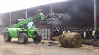 Feeding Cattle & Sheep with Merlo