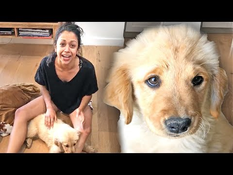 GIVING MY PUPPY TO LIZA KOSHY!