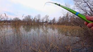 ТУТ НЕТ ГЛУБИНЫ А РЫБЫ ПОЛНО РАЗДАЧА В КАМЫШЕ Ведёт поплавок как карась Рыбалка весной 2021