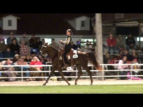 Missouri Fox Trotter Open 2 years WGC Ava 2014