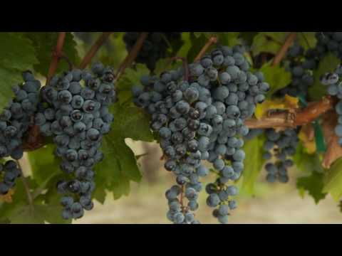 The Wines of Sonoma County