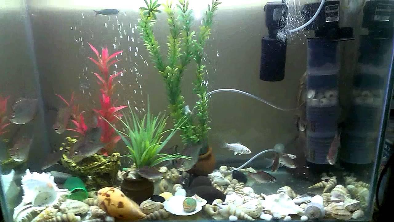 Fish aquarium in kurla - Fresh Water Fish Tank Mumbai