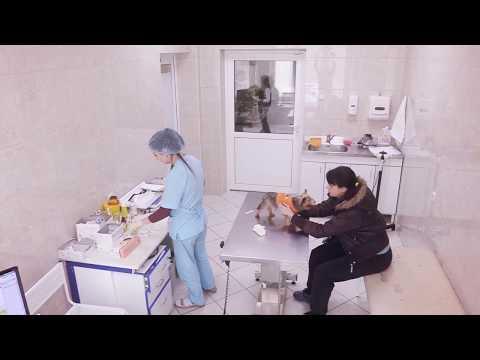 Ветеринарная клиника Калининского района. МРТ современный уровень диагностики.