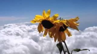 ヨシダアキヒロ富士山頂で遊助の『ひまわり』 青い空と雲、太陽つかまえ...