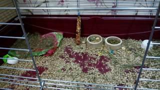 Идеальная клетка для декоративных кроликов!