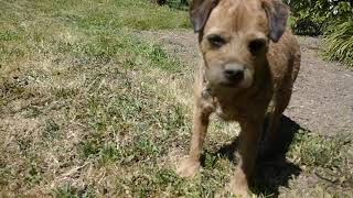 Nessie the  Border Terrier loves a soil bath !!