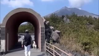 Sakurajima, Siberian Husky Hana Went To Sakurajima, Kagoshima, Japan Feb 23rd 2014