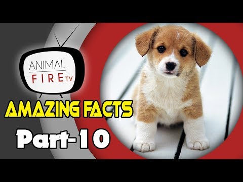 10 Amazing facts about Dogs - Part 10 (Dog Facts)