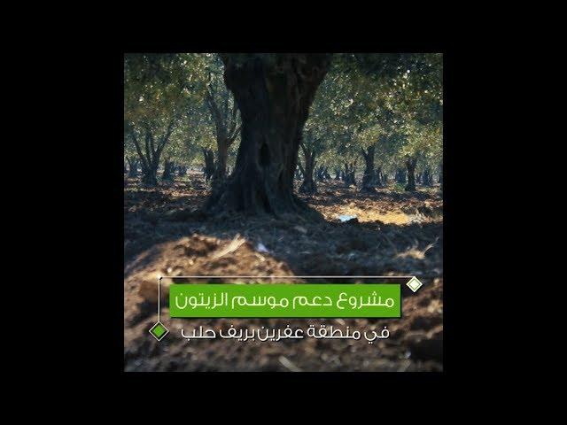 مشروع دعم موسم الزيتون في 10 قرى بمنطقة عفرين بريف حلب