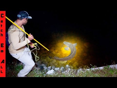 SPEAR FISHING EXOTICS from LAND at NIGHT!