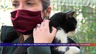 Yvelines | Un texte contre la maltraitance animale porté par une députée yvelinoise