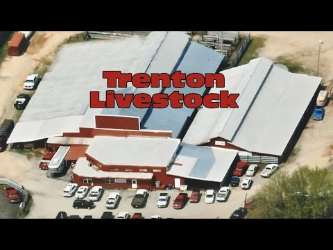 Trenton Livestock Auction Streamed Live