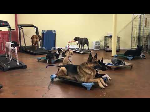 Dog Training | Lots of activity going on in the daycare room | Solid K9 Training Dog Training
