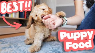 HOW TO FEED A PUPPY  Everything you need to know!