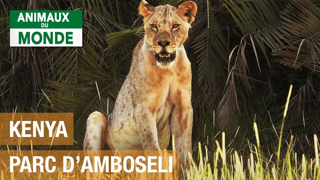 Parc national d'Amboseli (Kenya) - Les merveilles de la nature - Documentaire environnement HD