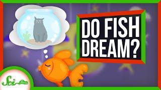 Do Fish Dream?