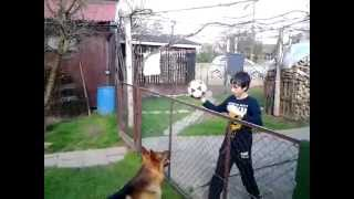 Smart Dog Who Like's To Play Volleyball
