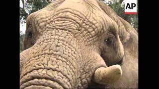 SOUTH AFRICA: WORLD'S OLDEST ELEPHANT CELEBRATES 36TH BIRTHDAY