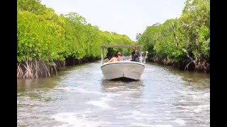 ヤップ島 マングローブ地帯 ヤップ島 検索動画 25