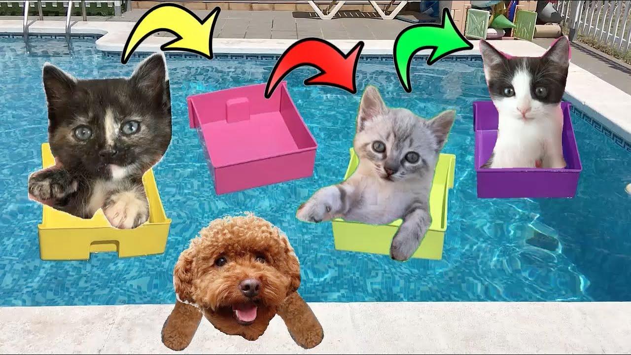 Retos en la piscina con los gatitos de mis gatos Luna y Estrella y mi perro / Cute Kittens